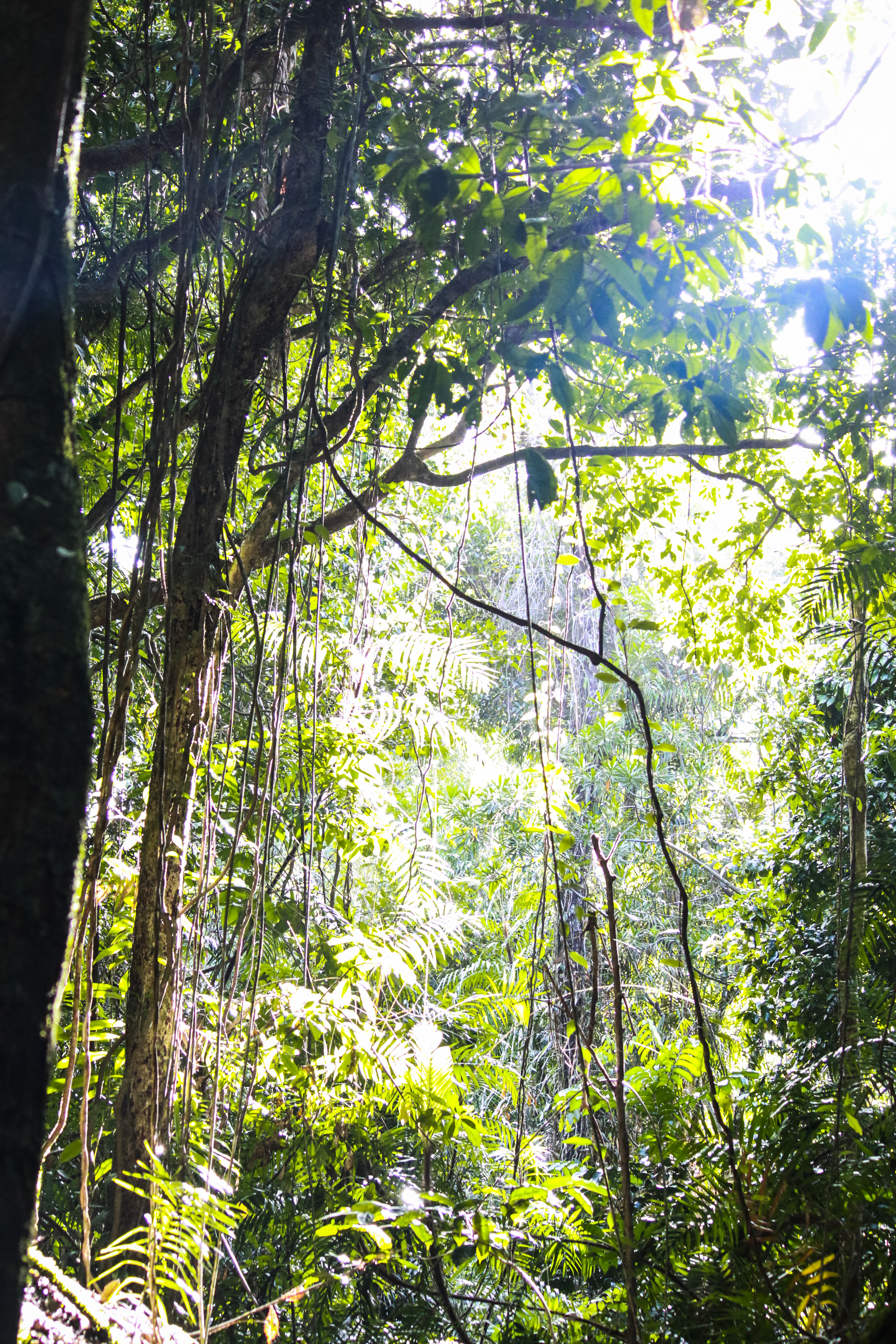 Ngadiku Dreamtime Gorge walk – Must-do from Cairns